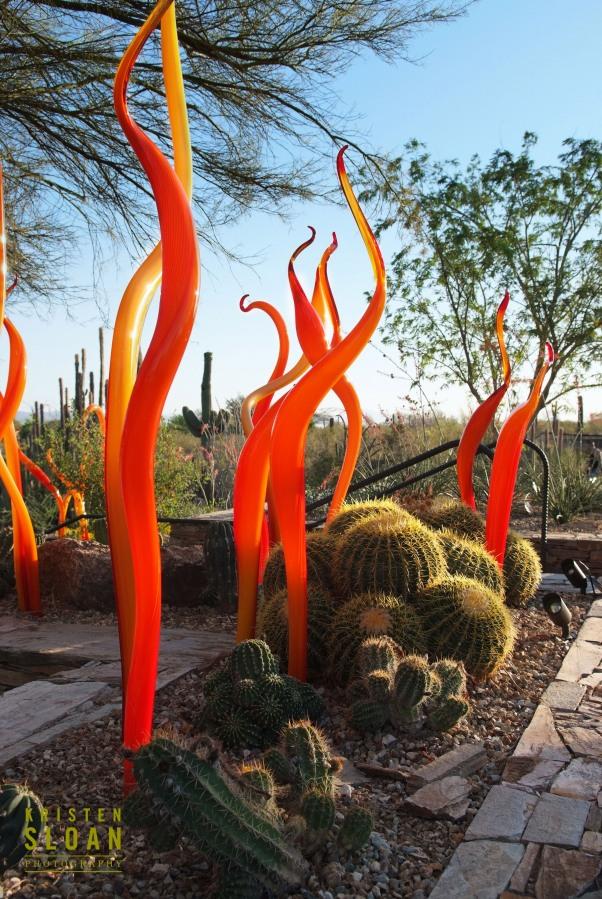 Dale Chihuly, Desert Botanical Garden, Phoenix, Kristen Sloan, glass art, art,