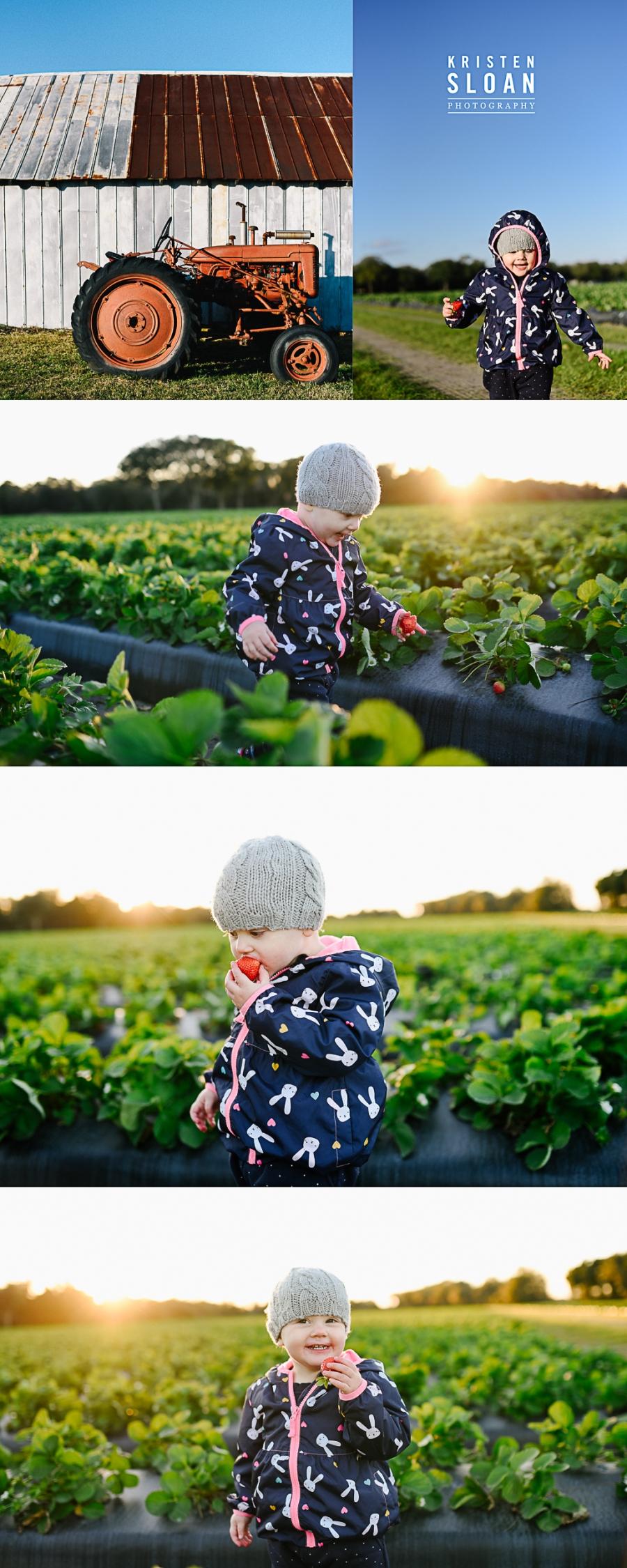 Plant City Strawberries | Florida Strawberry | Strawberry Picking at Fancy Farms Plant City Florida |St Pete FL Family Kids Baby Photographer