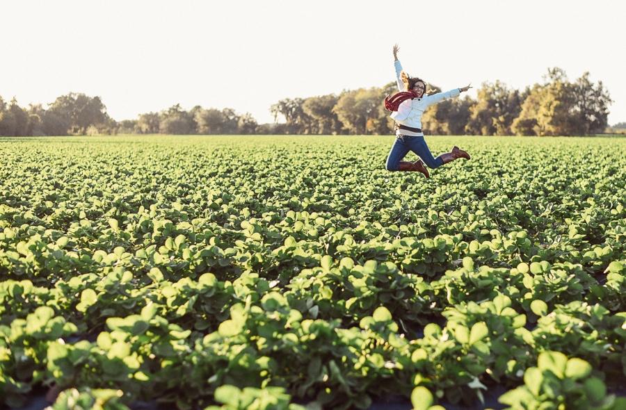 Plant City Strawberries | Florida Strawberry |Strawberry Picking at Fancy Farms Plant City Florida